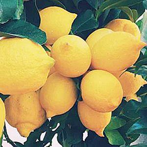 Lemons - Organic - California